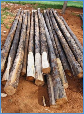 axed poles
