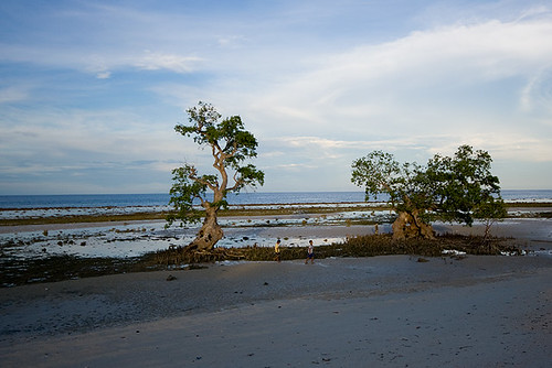 Mangrove, E. Villanueva
