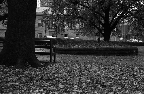 Dead leaves and a bench