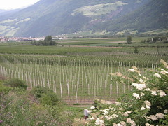 fruchtbares Südtirol