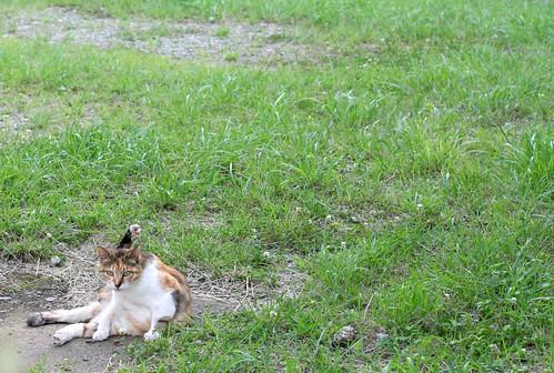 yogini cat