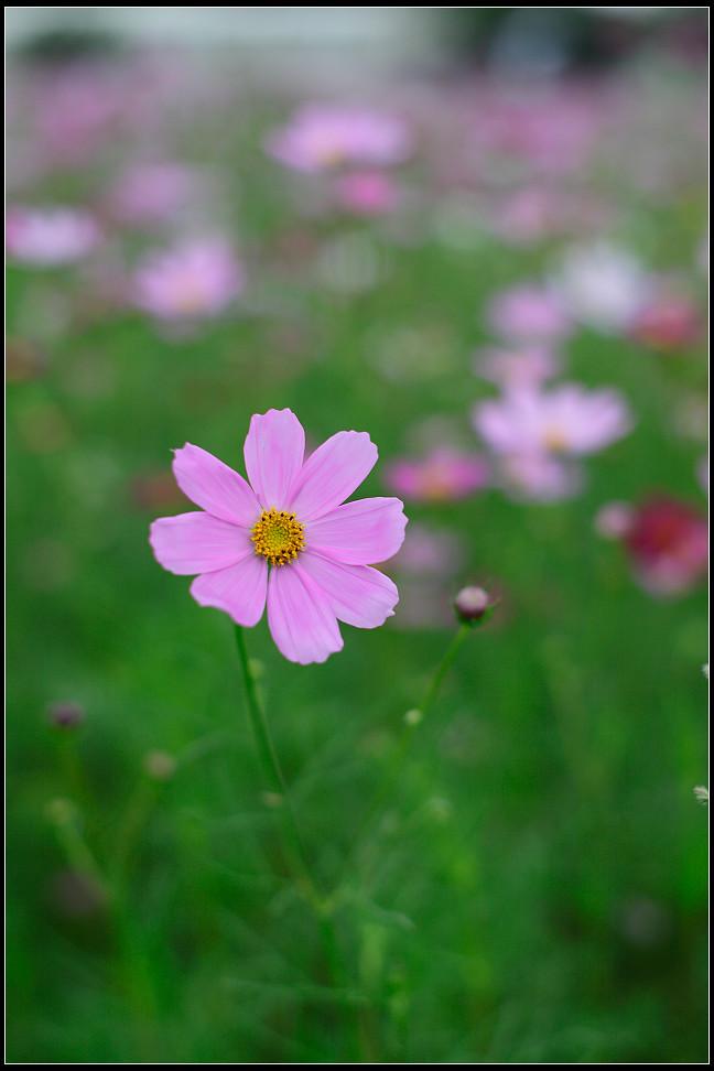 路上的小花(二)