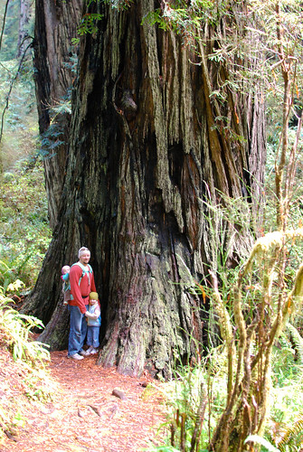 redwood-0281