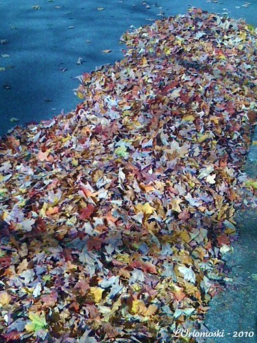Road Leaves