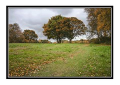AUTUMN TREES (mark_rutley) Tags: autumn trees tree fall leaves forest hampshire forestofbere