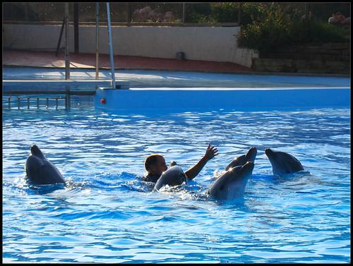 Espectáculo Delfines
