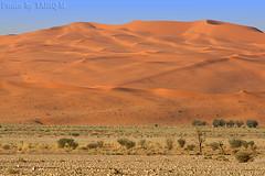 The Desert Dunes - Explore (TARIQ-M) Tags: tree texture landscape sand desert dunes riyadh saudiarabia hdr الصحراء الرياض صحراء خيمة رمال جمل ابل رمل canonef70200mmf4lusm طعوس طعس نياق المملكةالعربيةالسعودية canon400d الرمل ناقة خطوط نفود الرمال كثبان طلح طلحة تموجات تموج نفد