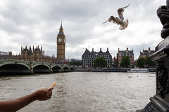London (jaumescar) Tags: london england unitedkingdom seagull bird food hand arm river thames bigben skyline city urban streetphotography cloudy sky water tower uk tourist sightseeing fly open wings wildlife street photography outdoor westminster bridge