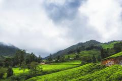 Misty Day - Meghamalai (Well-Bred Kannan (WBK Photography)) Tags: theni megamalai meghamalai teaestate teaplantation hill hills tourist landscape mist mistyevening wbkphotography kannan d750 tamron wideangle