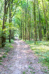 Summer Wood (enneafive) Tags: walking trail trees wood fujifilm xt2 leafs