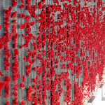 Poppies Left by Visitors to The Australian War Memorial thumbnail
