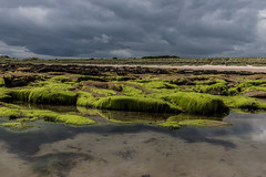 Beach at Seahouses (Tom Reville) Tags: england northumbria background beach beautiful beauty blue cloud coast coastal day desktop horizon island landscape nature northeast ocean sand sea shore sky sunny uk vacation wallpaper water wave white