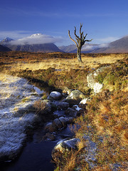 Skeleton Tree ~ Rannoch Moor, Scotland (Martin Sojka .. www.VisualEscap.es) Tags: blue sky snow mountains tree green nature colors grass landscape skeleton golden scotland highlands rocks stream tripod vivid olympus hills filter glencoe moor polarizer grad zuiko hitech gitzo e30 frosted rannochmoor 918 rannoch zd heliopan 918mm creativecommonscentral