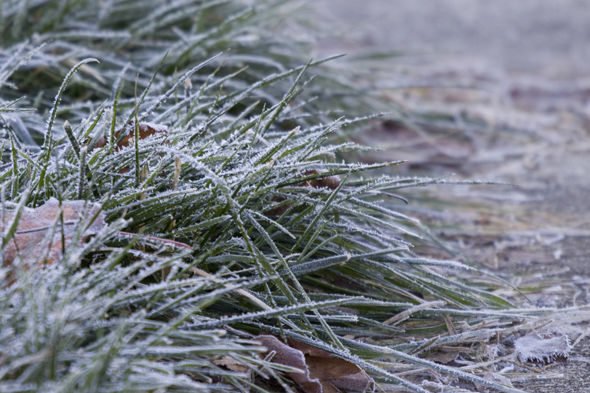 121909_frost7