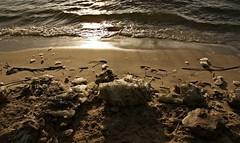 last ice (dittma_d) Tags: sun ice water river wasser hamburg fluss eis sonne elbe wittenbergen rissen