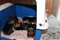 1st experience in the crate, they're lovin it!