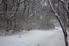 7.365 (jacqui | happy jack eats) Tags: winter snowstorm myeverydaylife project365 justoutsidemyfrontdoor jan72010