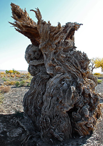 IMG_2234-w tree