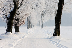 wonderful winter ((:Andrzej:)) Tags: road trees winter sun white snow zima droga biel nieg soce naturesfinest drzewa naturepoetry szad natureselegantshots absolutegoldenmasterpiece magicunicornverybest galleryoffantasticshots flickrstruereflection1