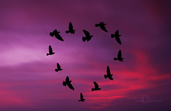 Birds In Love  (MJ ) Tags: pink sky bird birds silhouette canon hearts eos peace heart gray creative violet filter p 1855mm majid efs graduated 2010 alahmadi nd8 nd4 40d   cokinp coken