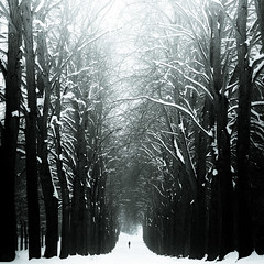 Path (96dpi) Tags: schnee winter snow forest person prime vanishingpoint alley alone path 85mm wald vivitar potsdam weg allee aspherical allein samyang festbrennweite