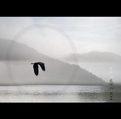 Zen-Mind (h.koppdelaney) Tags: world life morning light mist lake art heron beauty digital photoshop self peace state symbol buddha space happiness buddhism philosophy inner zen harmony mind inside meditation awareness metaphor cosmic consciousness psyche symbolism psychology selbst archetype oneness transduality gewahrsein selbstbeobachtung
