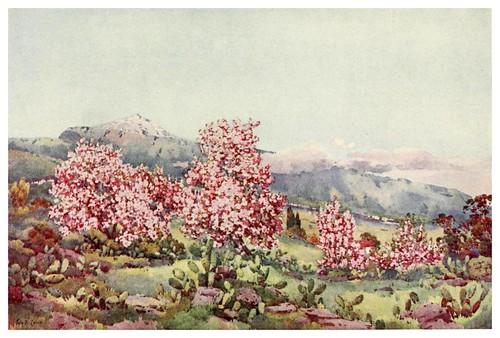 023-Almendros en flor-Valle de la Orotava-The Canary Islands (1911) -Ella Du Cane-Tenerife