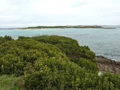 Piantarella : île de Piana et son accès par le cordon sableux à gauche