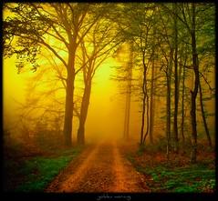 bei Morkeptz - golden morning (NPPhotographie) Tags: wood mist tree art nature fog forest sunrise germany way path creative dust oberberg topseven platinumphoto yourwonderland magicunicornverybest magicunicornmasterpiece