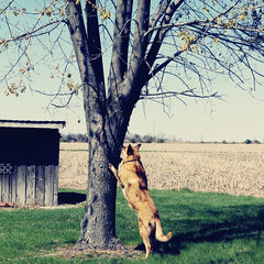 Gunner and the Squirrel (SOMETHiNG MONUMENTAL) Tags: dog pet tree field animal squirrel pentax farm shed indiana chase april 2009 k100d somethingmonumental mandycrandell
