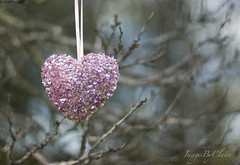 Pink Heart....{23/365} (ImagesByClaire) Tags: pink love 50mm heart yay glittery finally hangingfromabranch shuttersisters projecct365 therainhasstopped florabellatexture sohappytoseethesun sequinnedheart loveisntlovetillyougiveitaway