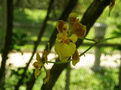 orquidea 14