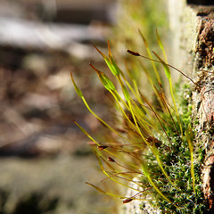 030:365 Exposed (patchworkbunny) Tags: plant macro green nature wall moss bokeh day30 project365 olympussp570uz 3652010