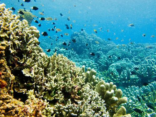Bunaken Underwater 05