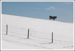 Ski interdit !!!! (cumin12) Tags: updatecollection
