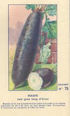 legume75 radis