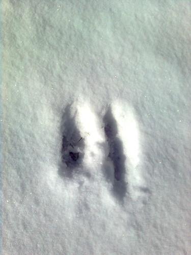hoofprint