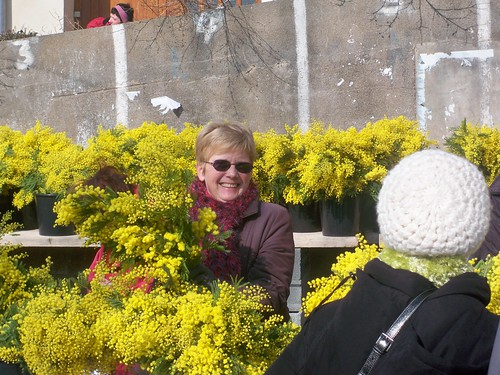 Mimosa Festival at Roqueburn