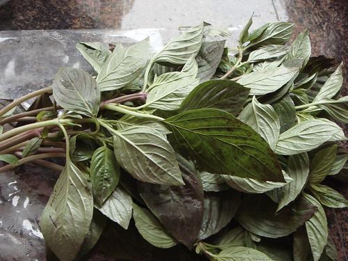 13.Feb.10 Thai sweet basil - also my first