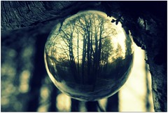 Winter Woods Through A Glass Ball (Clodders) Tags: winter ball woods glassball hbw