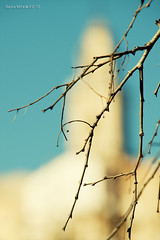 Bokeh-irent (Salva Mira) Tags: blue azul dof bokeh blau rama salva campanar pasvalenci bocairent desenfoc valldalbaida salvamira eixidetes eixidetespelpasvalenci salvadormira