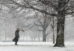 Storm (amythyst_lake) Tags: winter snow boston massachusetts snowstorm february bostoncommon