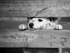 ... a volte i colori sono inutili ! (FranK.Dip) Tags: dog look animal cane canon eyes occhi sguardo animale brindisi eos450d dip2 frankdip 02212010