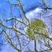 Snowing Blue Sky