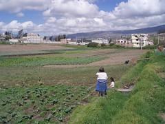 650 mts2, sector Inguhurco (josemigue1) Tags: en de la cuidad ambato terrenos