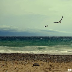 Winter Beach - To Fly Against the Wind / Volare controvento (Osvaldo_Zoom) Tags: winter sea italy seagulls beach boat fly seaside sand nikon waves gulls flight windy rc calabria messinastrait d80 naturepoetry gallico winterbeachproject