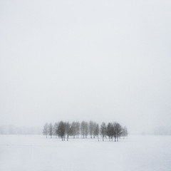 Grove (koinis) Tags: winter mist snow tree fog john square landscape grove sigma kung 24mm minimalism 18 bore copse sqr 500x500 koinberg koinis