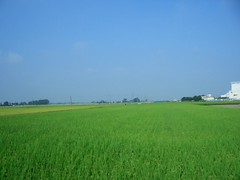 (Arse Ueba) Tags: japan saitama ricefields saitamaken kazo