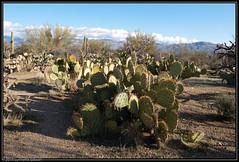 100309_Spring_Break_1304-Edit (Lynnette_) Tags: arizona desert saguaronationalpark sonoradesert