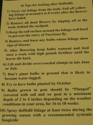 Daffodil Ten Tips